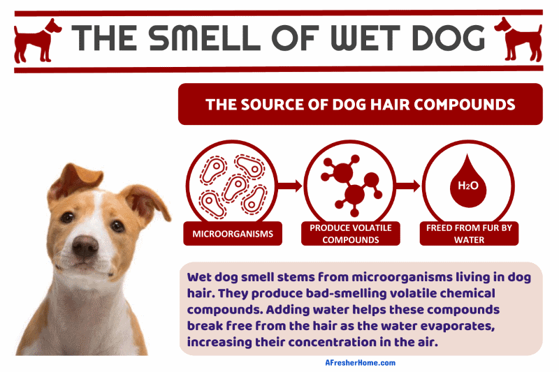 Wet dog smell odor infographic