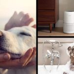 Will air purifiers help with dog smell featured image