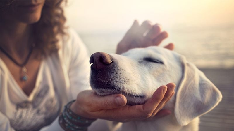 Woman petting white dog image