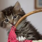 Image of a very cute kitten in a wicker basket