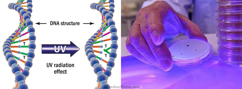 Diagram showing how UV light kills germs & DNA
