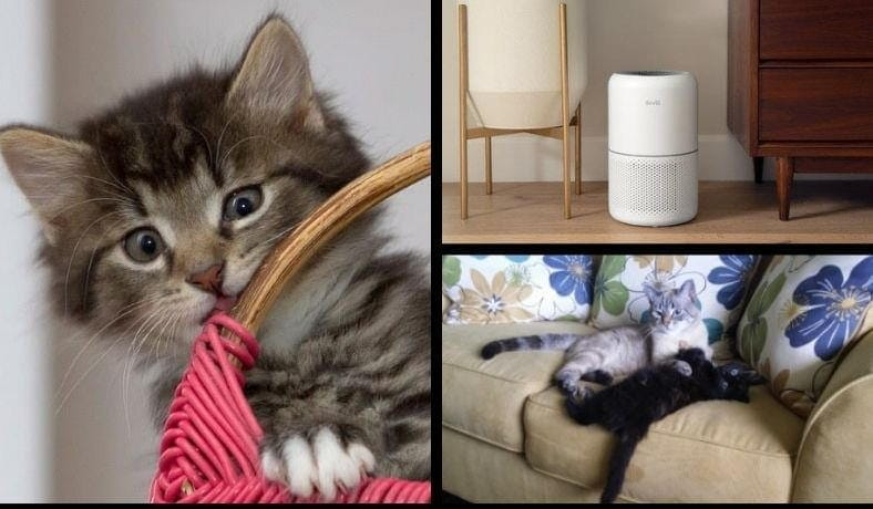 Do air purifiers help with cat hair featured image