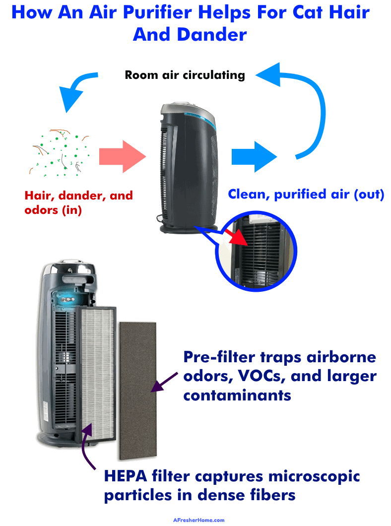 Diagram showing how an air purifier works for cat hair and dander