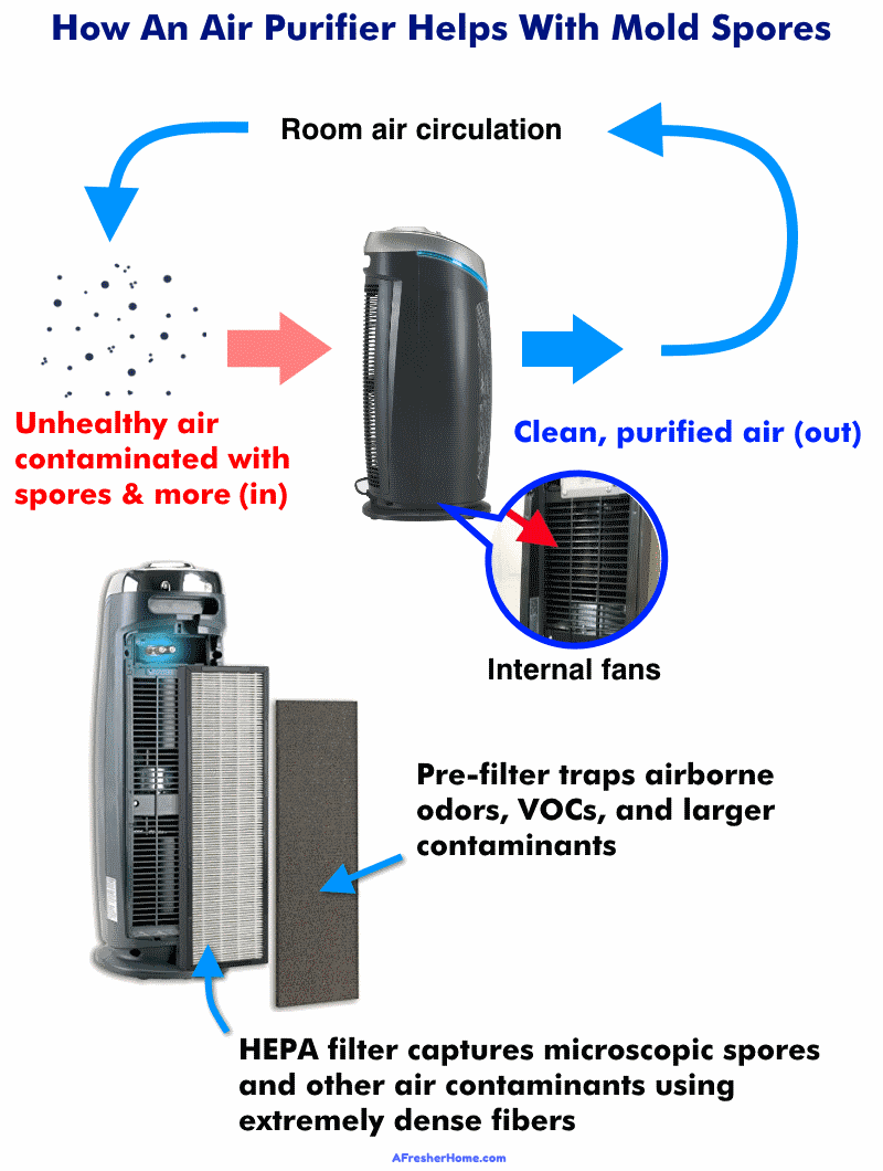 Diagram showing how air purifiers help with mold spores