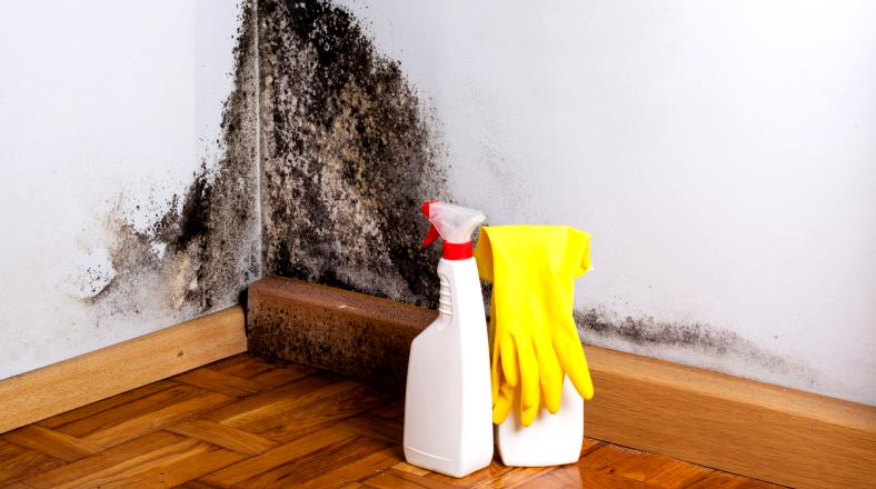 Example of mold on wall and cleaning products for removal