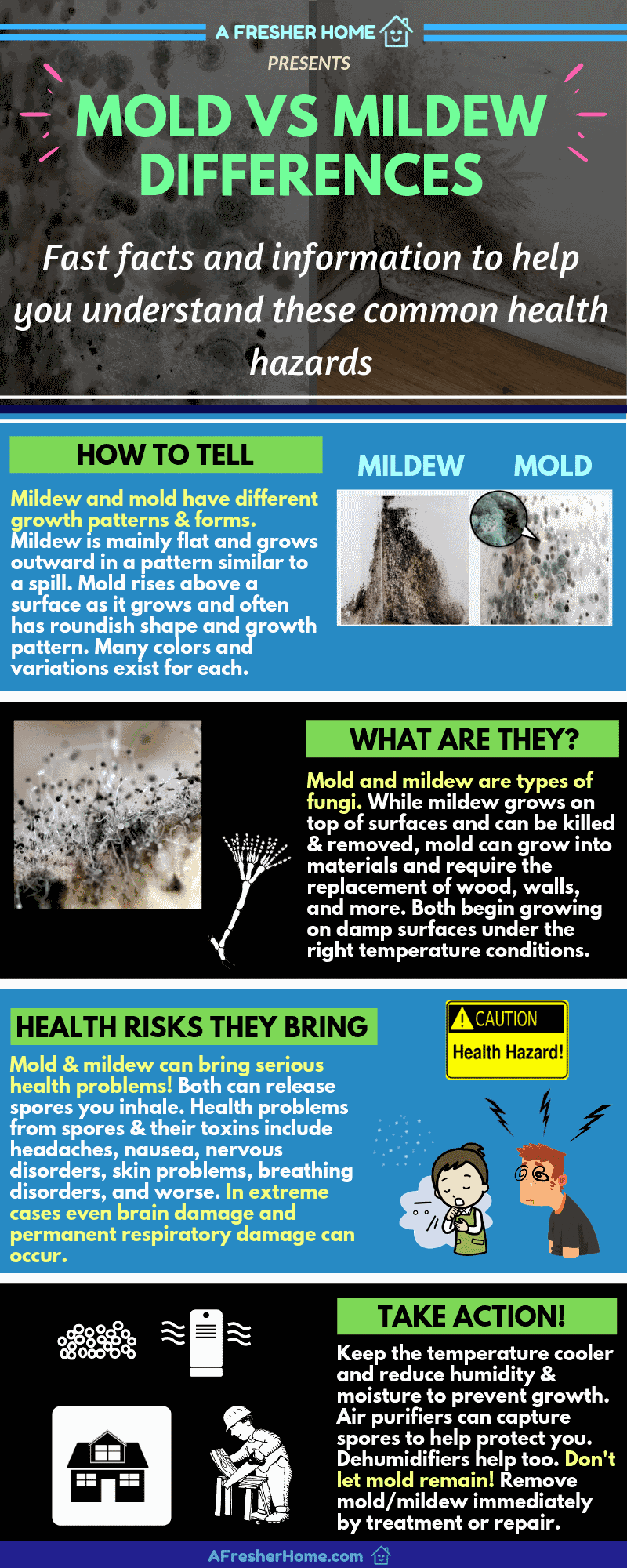 Mold vs mildew difference facts infographic guide