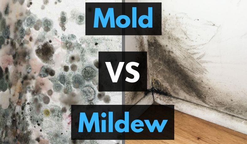Image for mold vs mildew differences informational guide