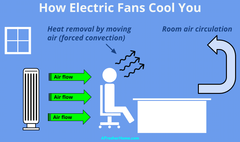 diagram showing how electric fans cool you