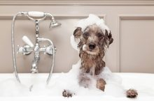 Dealing With Dog Odors – Will Air Purifiers Help With Dog Smell?
