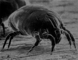 Do Air Purifiers Help With Dust Mites? What You Need To Know